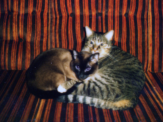 Katzen - Klopsi und Jogo