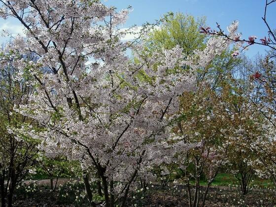 Baumblütenromantik