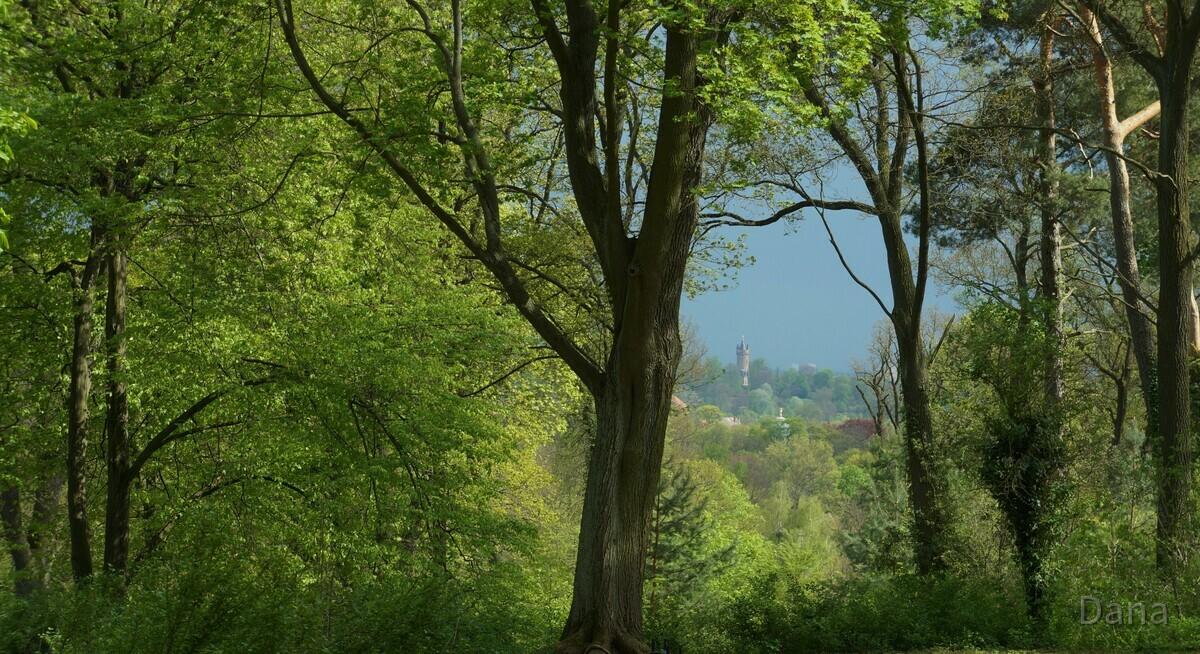 Blick auf den Flatowturn im Park Babelsberg