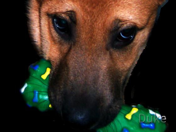 Hundwelpe Samson - Dog Puppy Samson