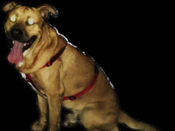 Alien-Hund Samson - Berlin