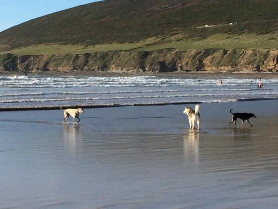 Hunde am Strand - Saunton Beach