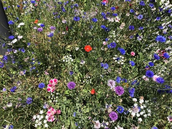 Schöne Sommerblumen