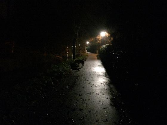 Herbstlichter - Nauheim - Autumn Lights - 2013 - Samson