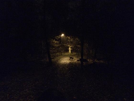 Herbstlichter - Königstädten - Autumn Lights - 2013 - Viehtrift - Wald 8