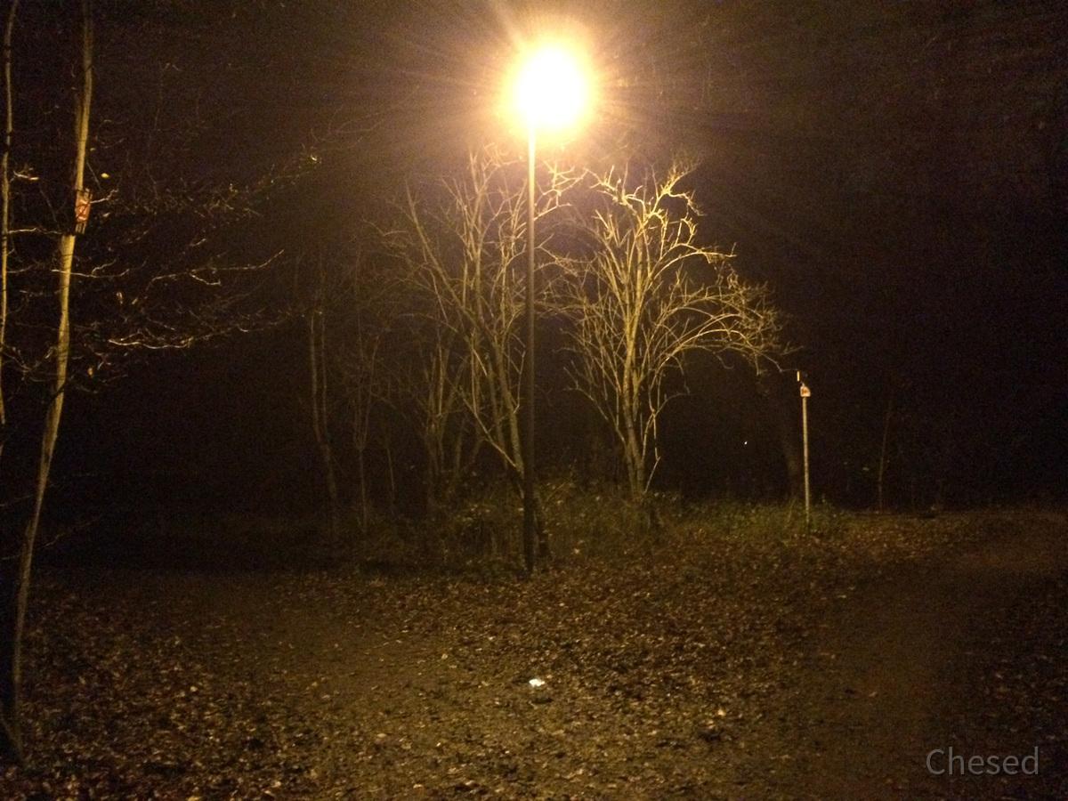 Herbstlichter - Königstädten - Autumn Lights - 2013 - Viehtrift - Wald 4