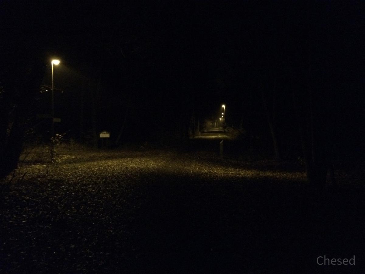 Herbstlichter - Königstädten - Autumn Lights - 2013 - Viehtrift - Wald