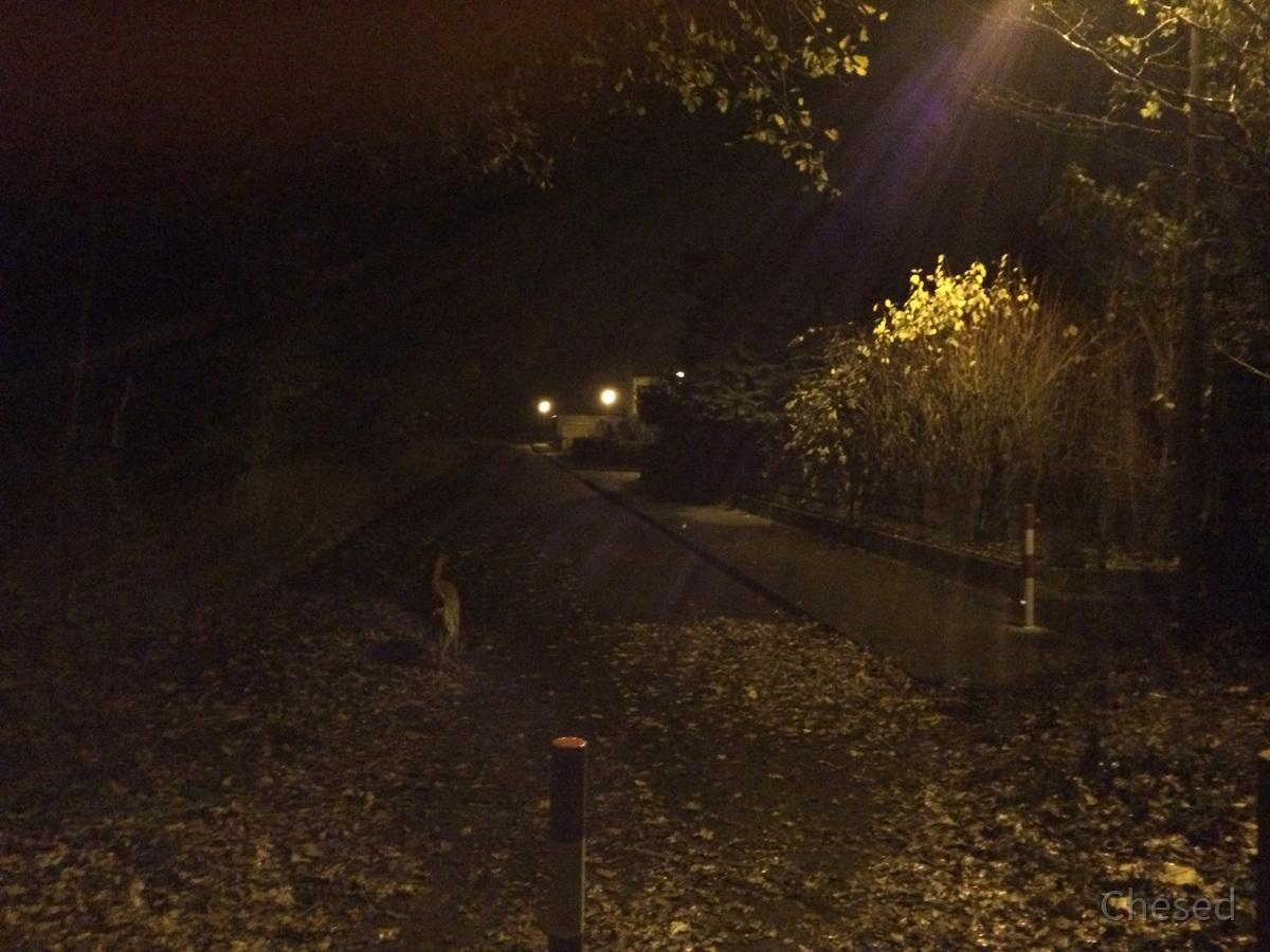 Herbstlichter - Königstädten - Autumn Lights - 2013 - Viehtrift - Samson