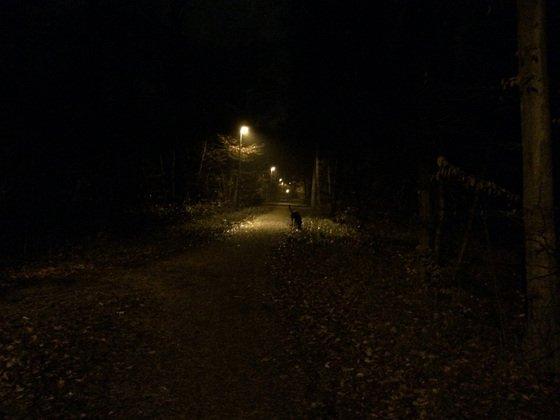 Herbstlichter - Königstädten - Autumn Lights - 2013 - Viehtrift - Wald 3