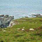 Wilde, Rauhe Landschaft und Schafe