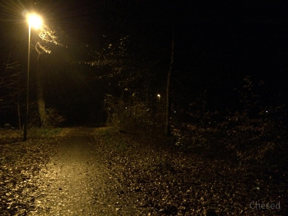 Herbstlichter - Königstädten - Autumn Lights - 2013 - Viehtrift - Wald 5