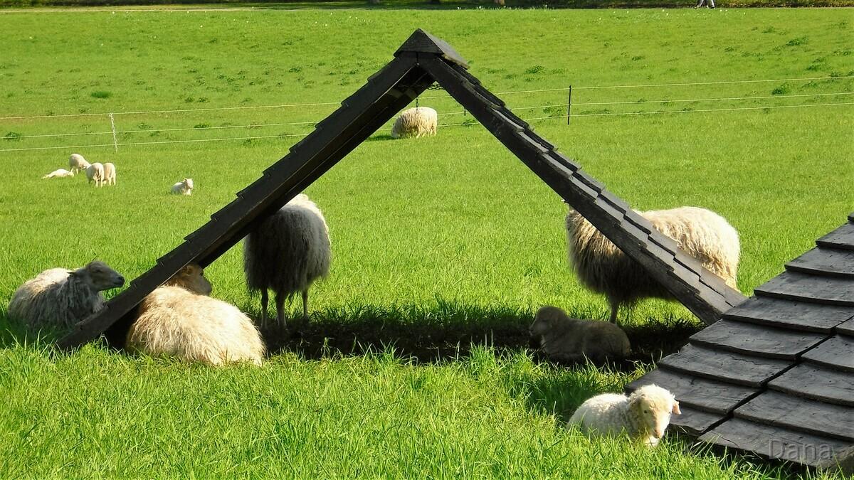 Schafe und Baby Schafe im Britzer Garten