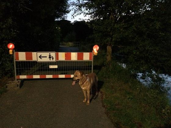Schwarzbach-Zulauf Baustelle - Hund Samson