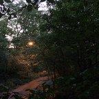 Frühlingslichter - Königstädten - Spring Lights - 2014 - Viehtrift - Wald 2