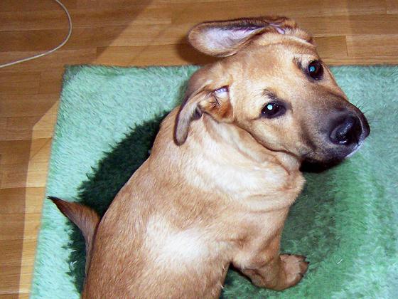 Samson 6 Monate alt - Karfreitag 2012