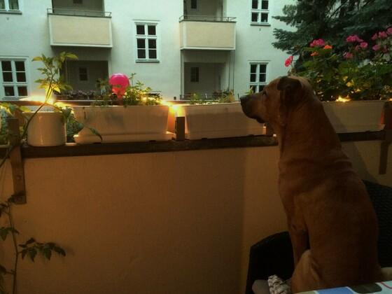 Samson auf dem Balkon