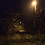 Herbstlichter - Königstädten - Autumn Lights - 2013 - Viehtrift - Wald 9