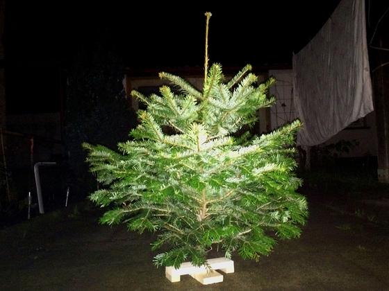 Duke's Weihnachtsbaum 2014