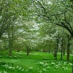 Feenwiese und Baumblüten im Britzer Garten