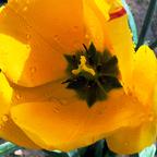 Herrliche gelbe Blumenschönheit