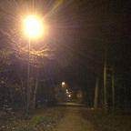 Herbstlichter - Königstädten - Autumn Lights - 2013 - Viehtrift - Wald 2