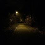 Herbstlichter - Königstädten - Autumn Lights - 2013 - Viehtrift - Wald 1