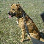 Hund Samson am Hegbachsee - Niederwaldsee