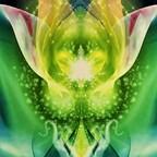 Drachenkraft Energie -Heilung