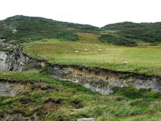Grüne Hügellandschaft und Schafe - Woolacombe