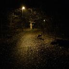 Herbstlichter - Königstädten - Autumn Lights - 2013 - Viehtrift - Wald 7