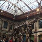 Dinosaurier Brachiosaurus