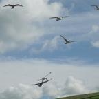 Seevögel