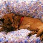 Samson testet das neue Sofa