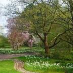 Zauberhafte Baumblüten