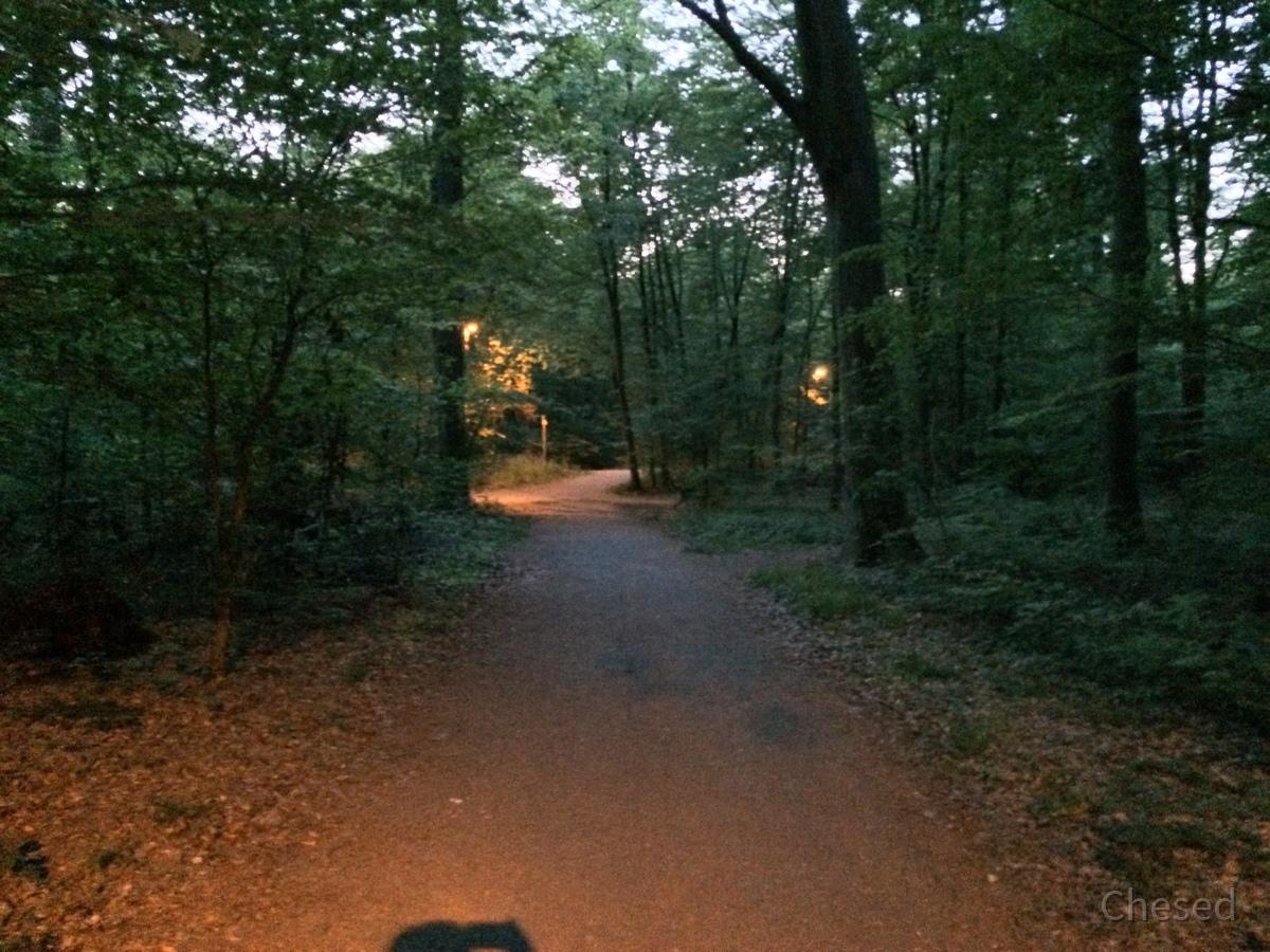 Frühlingslichter - Königstädten - Spring Lights - 2014 - Viehtrift - Wald 1