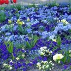 Blumenteppich - Marzahner Gärten