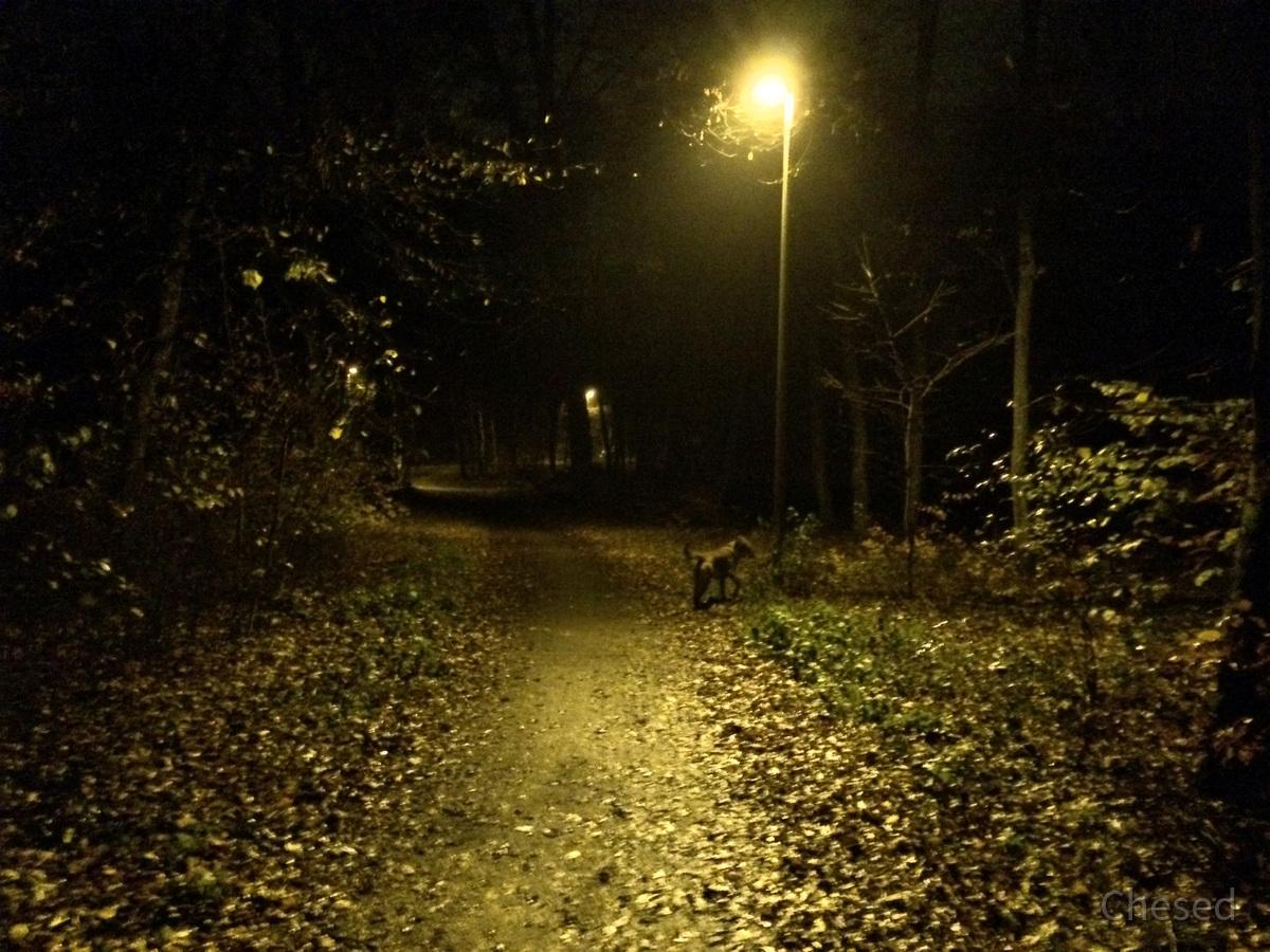 Herbstlichter - Königstädten - Autumn Lights - 2013 - Viehtrift - Wald 6