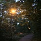 Frühlingslichter - Königstädten - Spring Lights - 2014 - Viehtrift - Wald