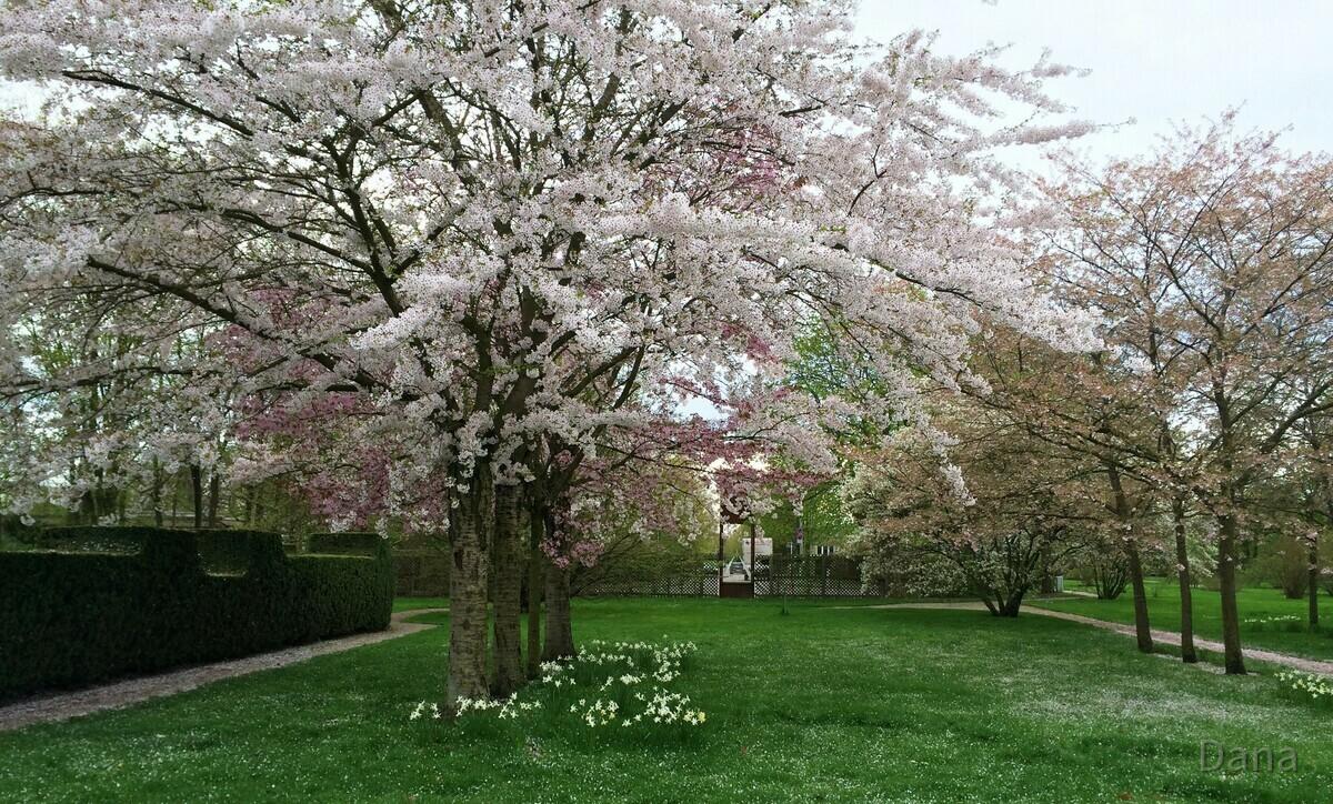 Kirschbaumblütenfest im Britzer Garten