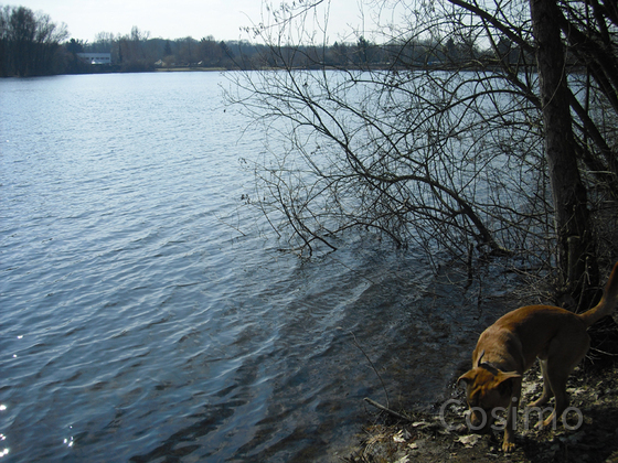 Hegbachsee Nauheim - Niederwaldsee Gross-Gerau mit Hund Samson