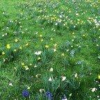 Blumenwiese im Britzer Garten
