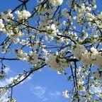 Wunderschöne Baumblüten
