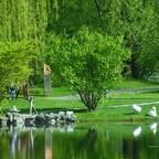 Schwäne -  Chinesicher Garten